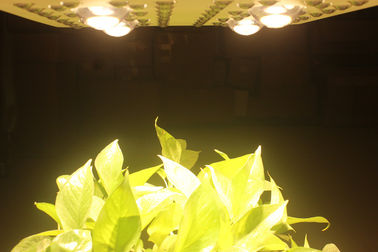 Luzes de LED Grow